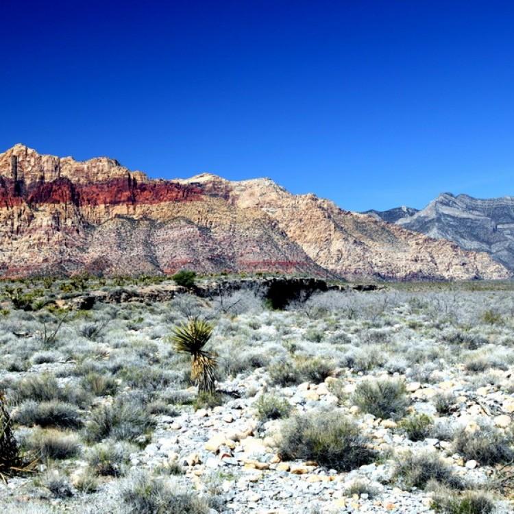 Landscape #1096