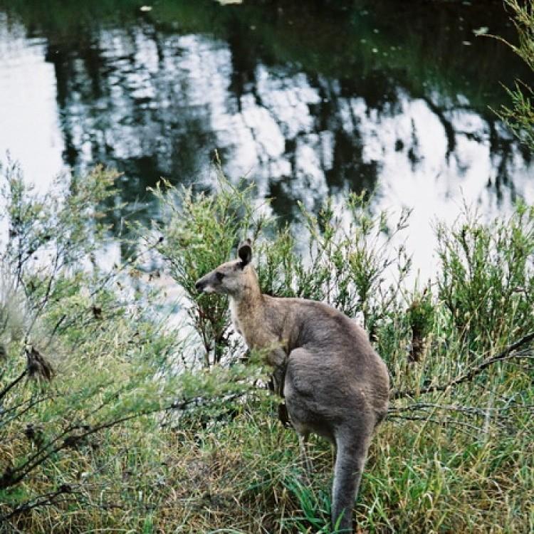 Australia #1073