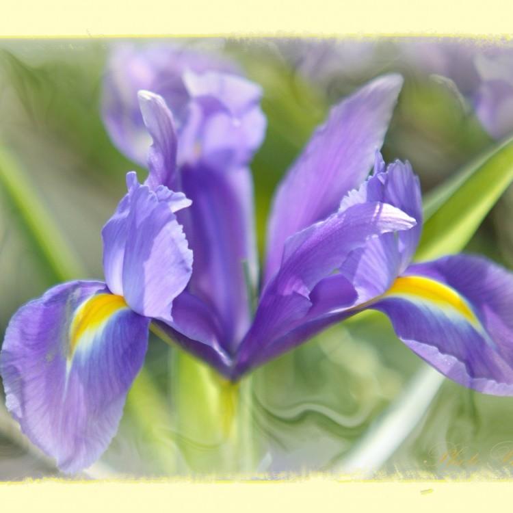 Flower_01 #104