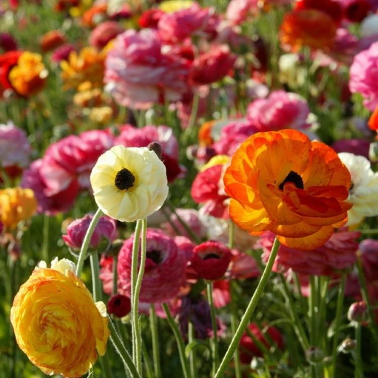 Flowers Plans #1893