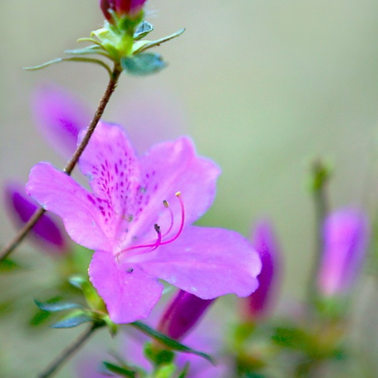 Flowers Plans #352