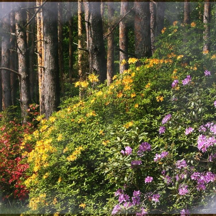 Flowers Plans #353