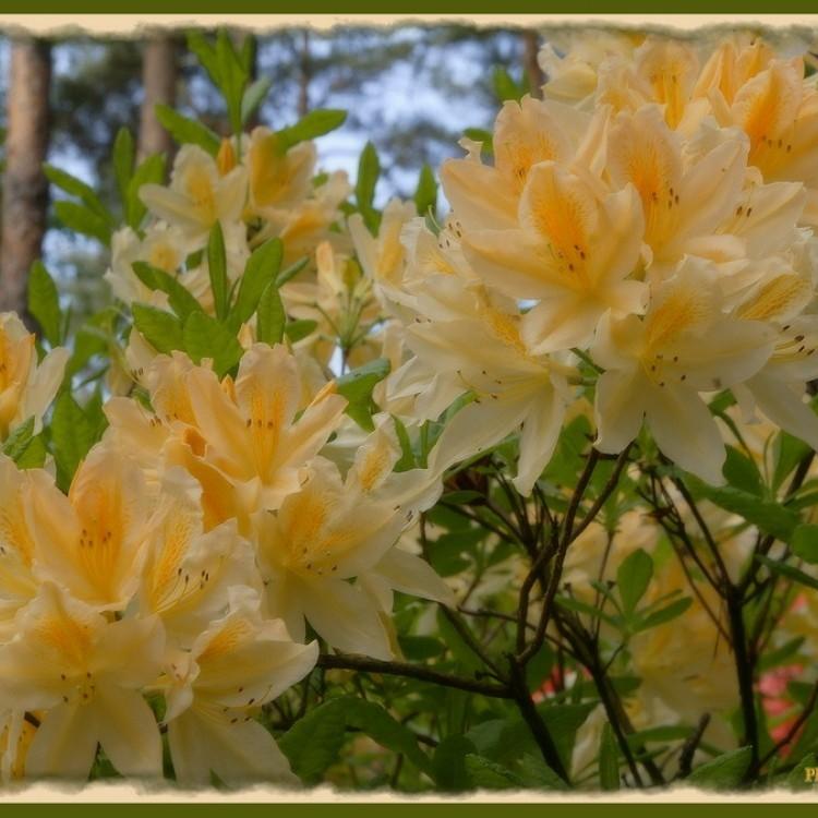 Flowers Plans #354