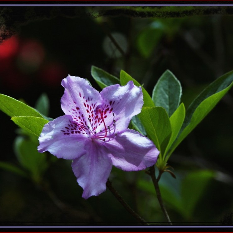 Flowers Plans #355