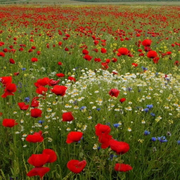Flowers Plans #356