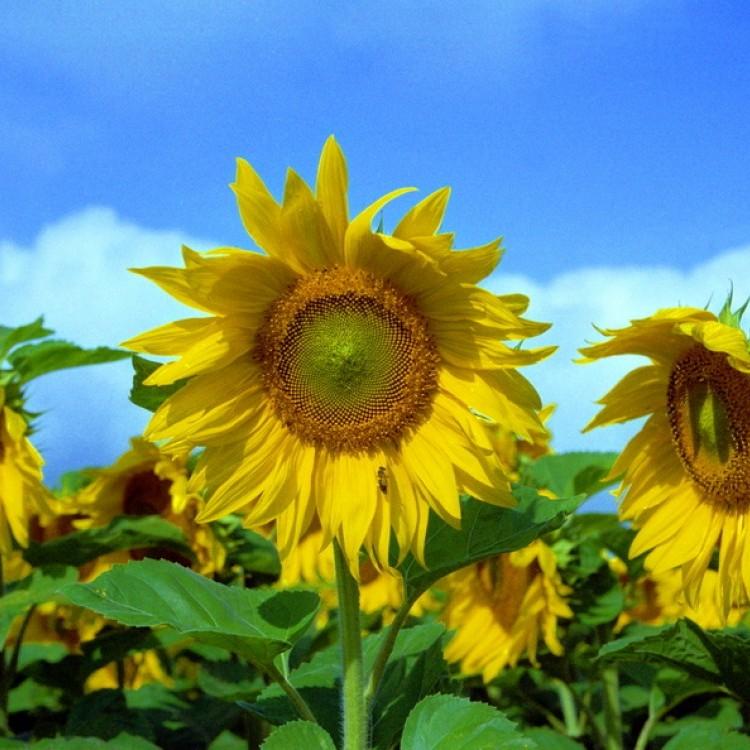 Flowers Plans #359