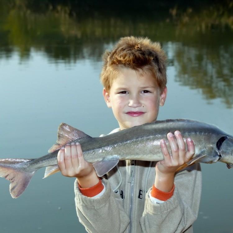 Fishfarm Zsennye #801