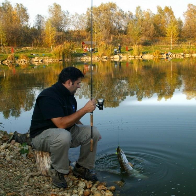 Fishfarm Zsennye #803