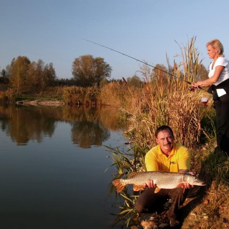 Fishfarm Zsennye #804