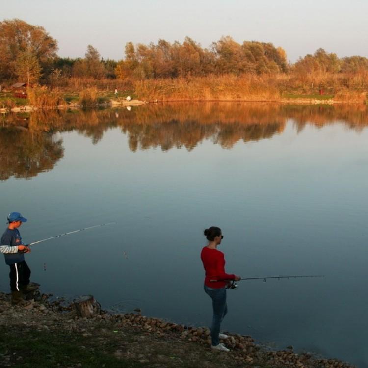 Fishfarm Zsennye #805