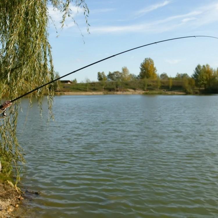 Fishfarm Zsennye #812